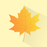 Maple Yellow Leaf Hand Draw Color Icon Vector. Illustration Royalty Free Stock Images