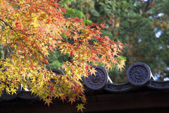 The maples in Japan. The maple and the Japanese-style eaves  in Japan Royalty Free Stock Photos