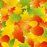 Maples leaves seamless Royalty Free Stock Photos
