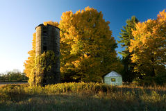 Maples and silo Royalty Free Stock Image