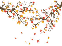 Maples tree falling background Royalty Free Stock Photos