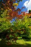 Maples in Westonbirt Arboterum 1 Stock Image