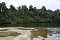 Mapourika Westland озера Стоковые Изображения