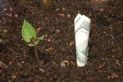 mapp som växer hög pengarupplösning Arkivfoton