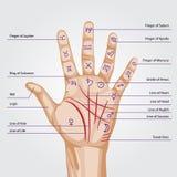 Mappa di chiromanzia sulla palma aperta Fotografie Stock Libere da Diritti