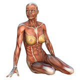 Mappe del muscolo Fotografia Stock