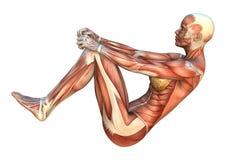 Mappe del muscolo Immagini Stock