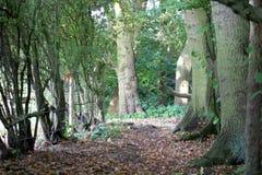 Mapperley trä Arkivfoton