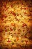Mapple doorbladert de Achtergrond van de Herfst grunge Stock Afbeeldingen
