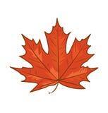 Mapple leaf cartoon Stock Photos