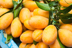 Maprang : tropical fruit Royalty Free Stock Photography
