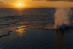 Mapu`a `a Vaea Blowholes Tonga, Tongatapu Island royalty free stock photography