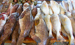 Maputo fish market Royalty Free Stock Photography