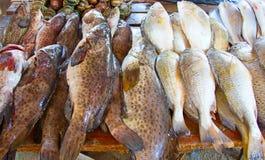 Maputo fiskmarknad Royaltyfri Fotografi