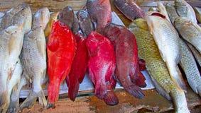 Maputo fiskmarknad Royaltyfri Bild