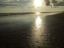 Maqsail strand med havsskal Royaltyfria Foton