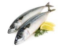 maquereau d'isolement par poissons photo stock