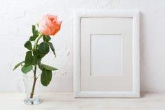 Maqueta blanca del marco con la rosa cremosa del rosa en el florero de cristal Imagenes de archivo