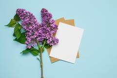 Maqueta fresca de la tarjeta de felicitación del fondo de la lila del rosa de la rama fotografía de archivo libre de regalías