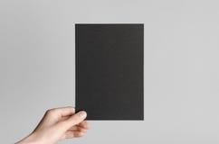Maquette noire de l'insecte A5/invitation Photographie stock