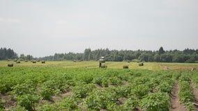 Maquinaria agrícola pesada y granjero que trabajan en campo rural almacen de metraje de vídeo