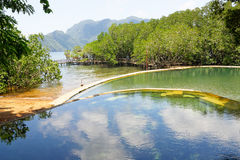 Maquinit Hot Springs, île de Busuanga, Philippines Images stock