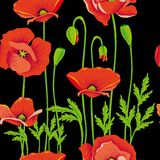 Maquis poppies maki Royalty Free Stock Photo