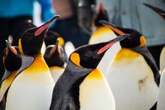 março do pinguim no jardim zoológico de Asahiyama, Hokkaido fotos de stock