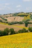 Marços (Italy), paisagem no verão Fotos de Stock