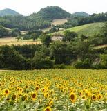 marços: paisagem do país Imagens de Stock