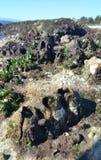 Maré baixa da praia de Seattle imagens de stock
