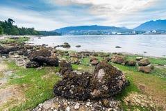 Maré baixa em Stanley Park, Vancôver, BC imagens de stock royalty free