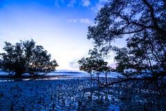 Maré baixa na manhã Imagem de Stock