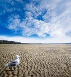 Maré baixa na praia branca da rocha, Columbia Britânica Foto de Stock