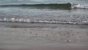 Maré no oceano Ondas na areia vídeos de arquivo
