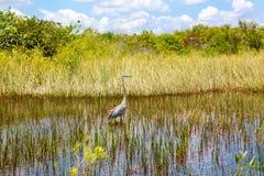 Marécage de la Floride, tour d'Airboat au parc national de marais aux Etats-Unis photographie stock