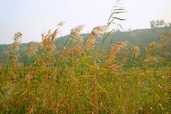 Marécage de Lingbao photos stock