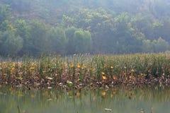 Marécage de Lingbao photographie stock libre de droits