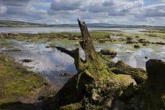 Marécage irlandais photographie stock libre de droits