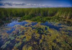 Marécage - secteur de conservation de Pelee de point photo stock