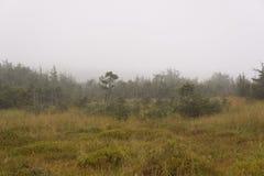 Marécages d'étang de Ponkapoag un jour brumeux images stock