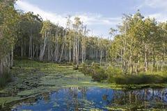 Marécages d'Urunga, Nouvelle-Galles du Sud image stock