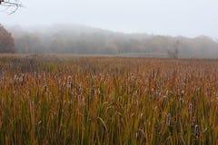 Marécages en automne en Nouvelle Angleterre Photographie stock libre de droits