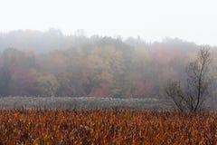 Marécages en automne en Nouvelle Angleterre Photos libres de droits