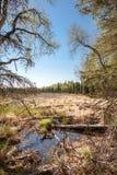 Marécages et forêt Image stock