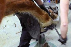 Maréchal-ferrant Shoeing un cheval photographie stock libre de droits