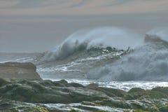 Marée argentée Photos libres de droits
