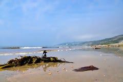 Marée basse chez Charmouth Photographie stock