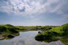 Marée basse chez Charmouth Photographie stock libre de droits