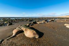 Marée basse dans la Manche de briquet, Patagonia, Argentine image stock